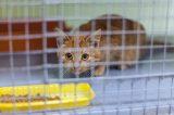 kitten in shelter.