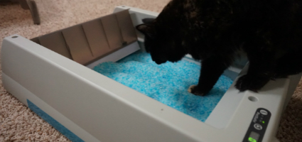 We Review The Scoopfree Self Cleaning Litter Box Catster