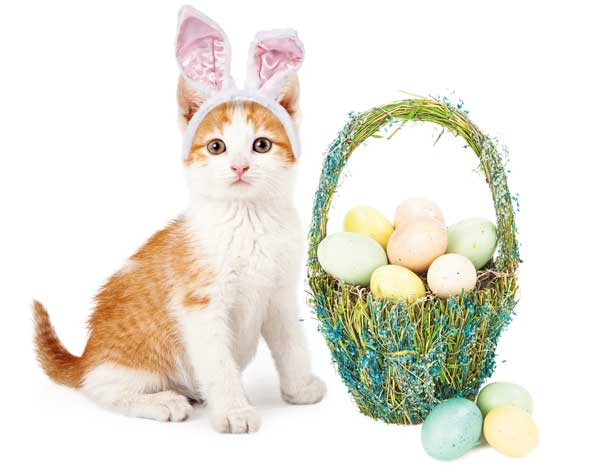 A cat with an Easter basket.