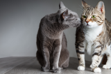 Cats sniffing each other.