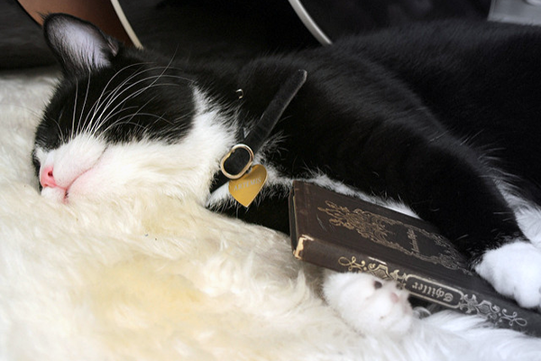 A sleeping cat holds a book of German poetry
