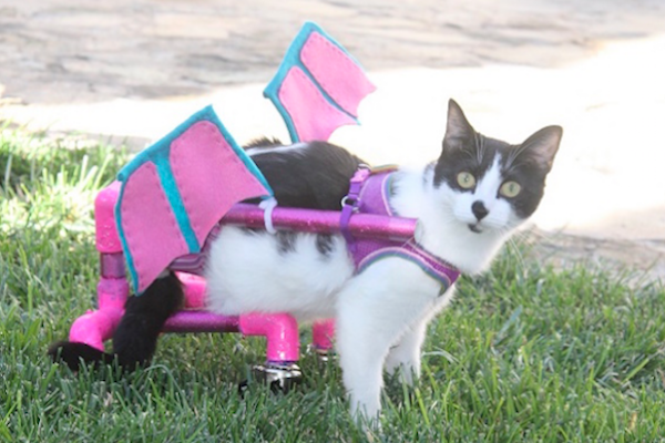 Workers On Wheels >> Cats on Wheels | Catster
