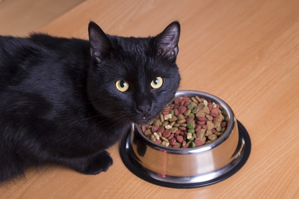 Causes Of Cat Not Eating