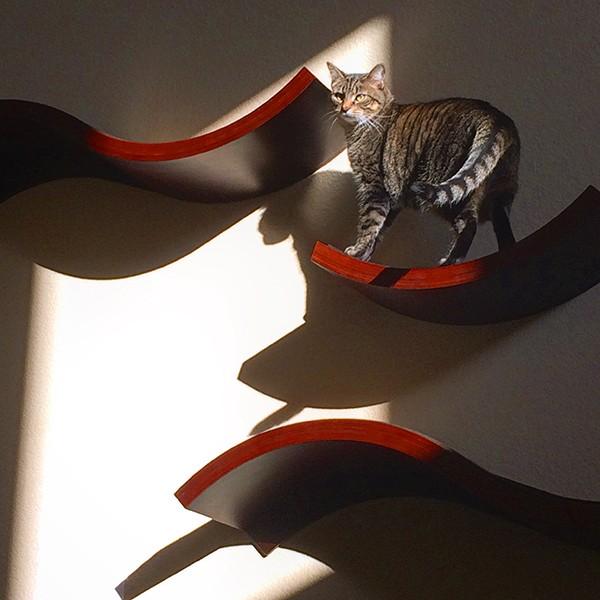 CatShelves1