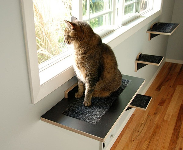 Help Your Cat Reach A New Level Stylish Climbing Shelves