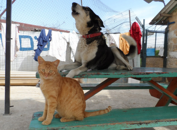 JSPCA-kitten-and-dog