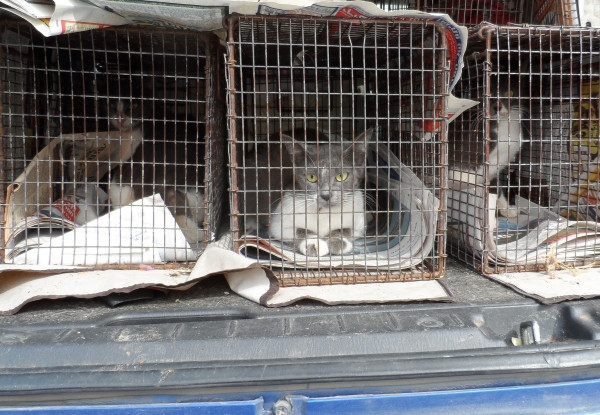 JSPCA-trapping-cats-TNR