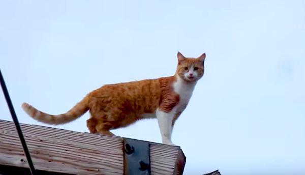 Miss-Kitty-1