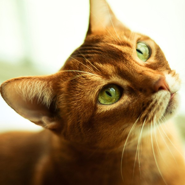 Can biology offer any clues to whether cats can see ghosts? (Photo via Pixabay)