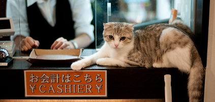 A cat sitting at the cashier's desk of a cat cafe.