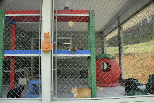 Some Catman2 residents enjoying their safe and enclosed outdoor patio. (All photos courtesy Harold Sims, photo by Vickie April)
