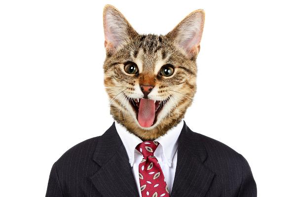 cat 5 cat 6