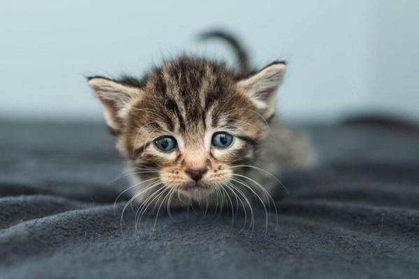 catster-kitten rescue-1