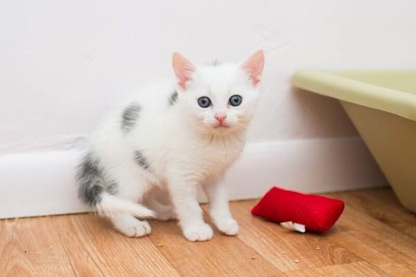 catster-kitten rescue-11