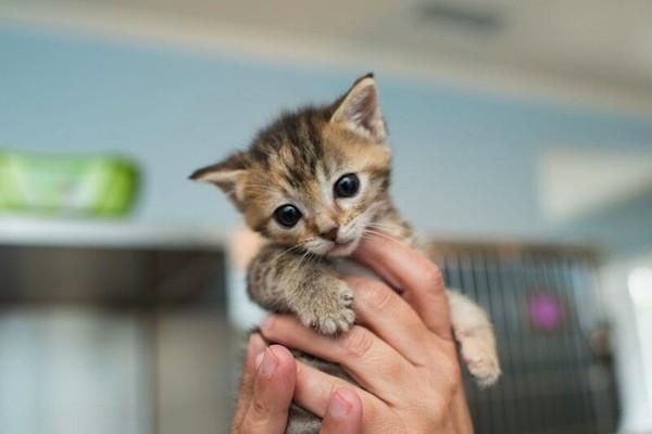 catster-kitten rescue-17