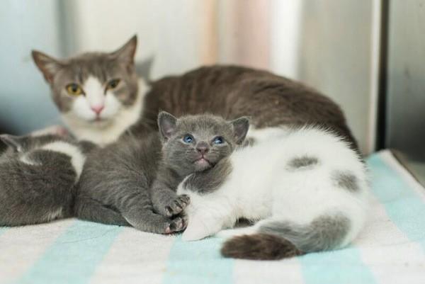 catster-kitten rescue-19