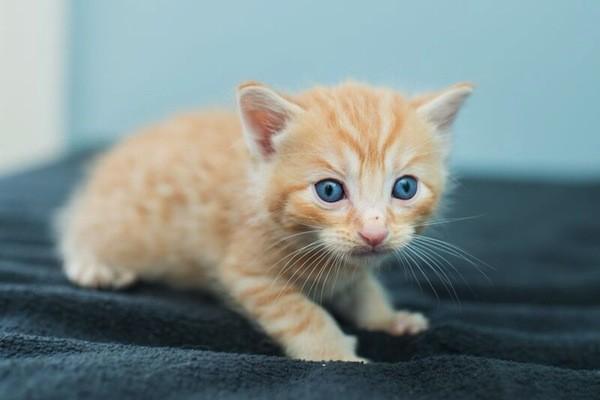 catster-kitten rescue-2