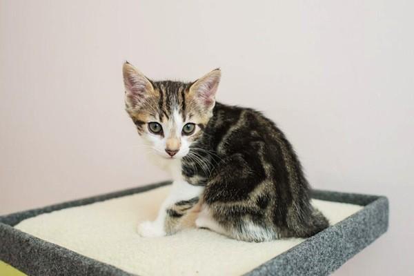 catster-kitten rescue-20