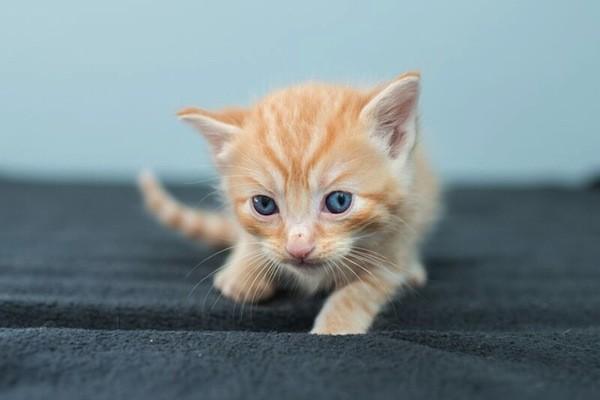 catster-kitten rescue-21