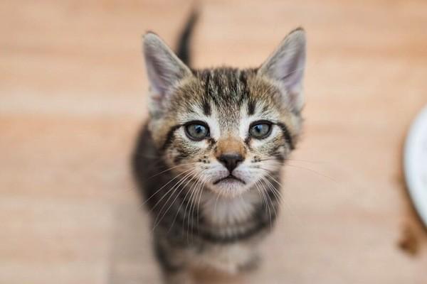 catster-kitten rescue-26