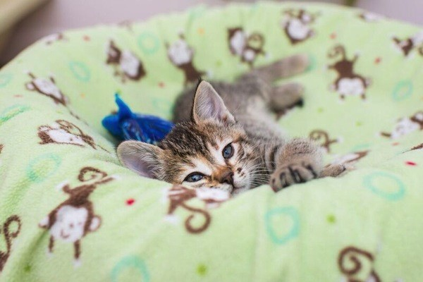catster-kitten rescue-27