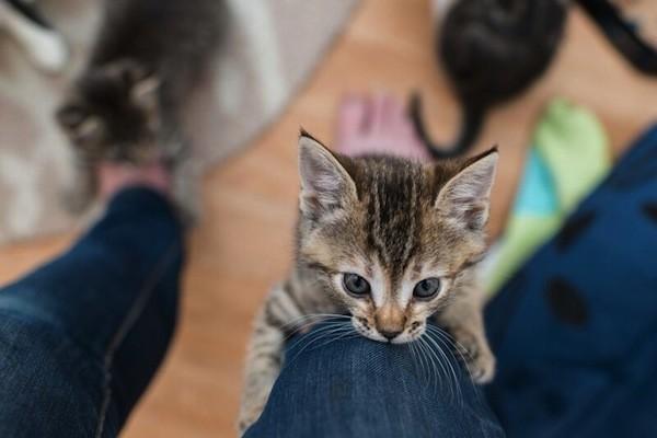 Http Www Catster Com Lifestyle Cat Behavior Care Best Places Litter Box Location