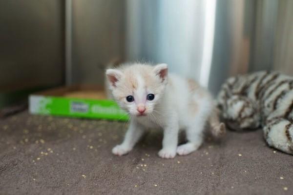 catster-kitten rescue-8
