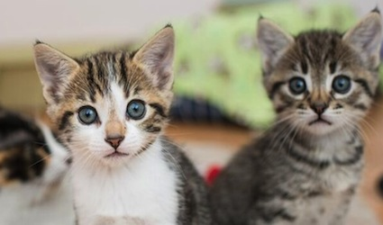 30 unbearably cute cat pictures from los angeles kitten rescue catster