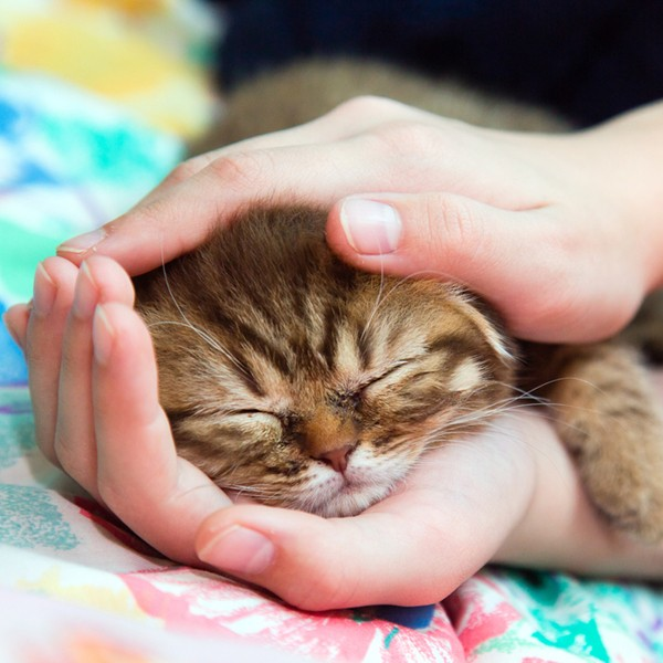 can cats be service animals? - catster