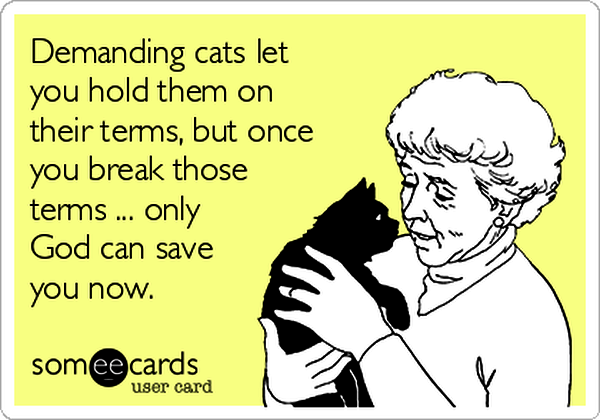 3-demanding-cats-let-you-hold-them-on-their-terms-but-once-you-break-those-terms-only-god-can-save-you-now-e50aa