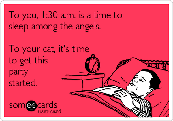 6-to-you-130-am-is-a-time-to-sleep-among-the-angels-to-your-cat-its-time-to-get-this-party-started-9dcf1