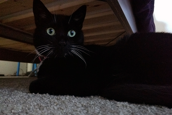 Tara still enjoys spending quality time under the bed, but she's a lot less stressed now!
