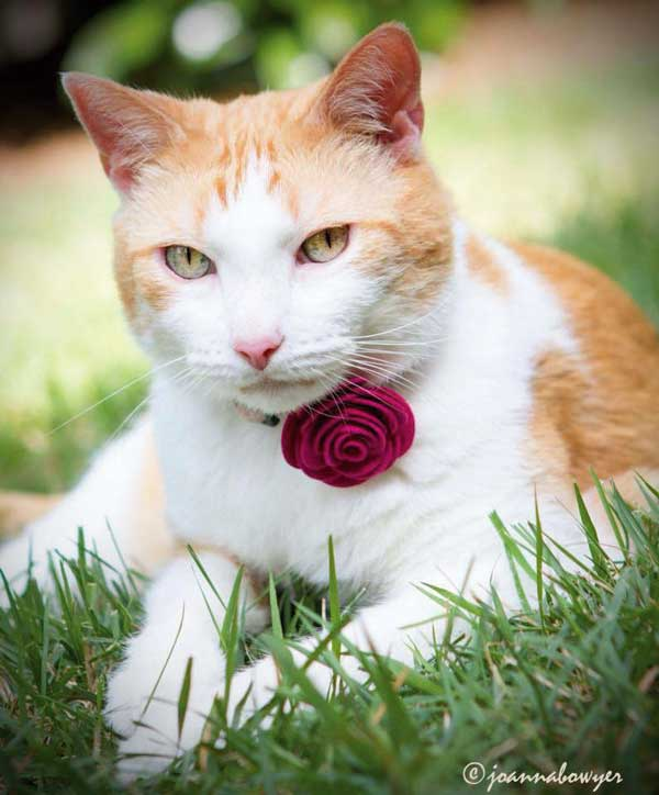Miz Julep wears a corsage at the Oregon Humane Society. Photo courtesy Morgan Green-Hopkins.