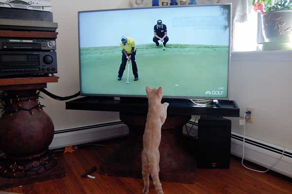 Spartan Enjoys Watching Sports On Tv Photo Courtesy Janice Daut