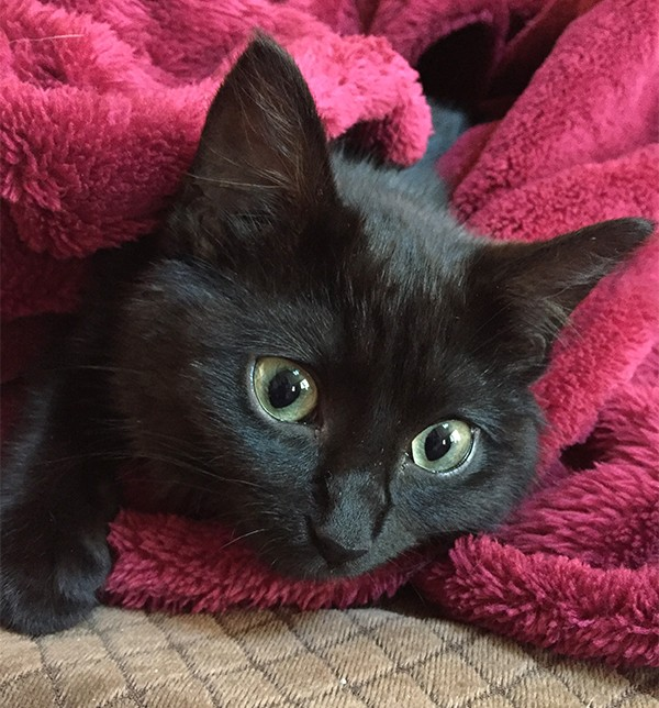 The little black kitten has wide green eyes but was brave enough to be the first to be held.