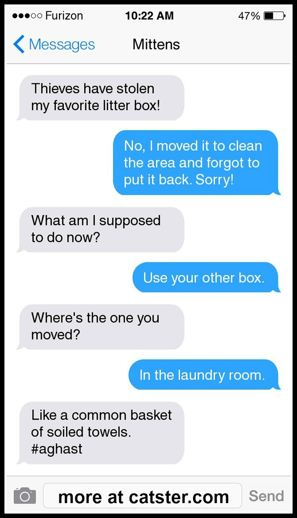 texts-from-mittens-litter-box-1