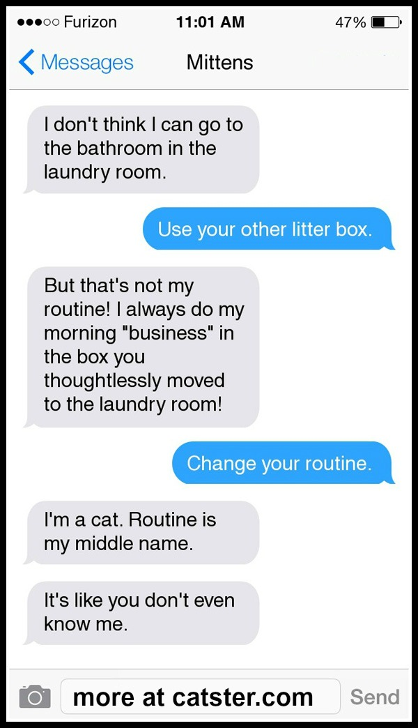texts-from-mittens-litter-box-3
