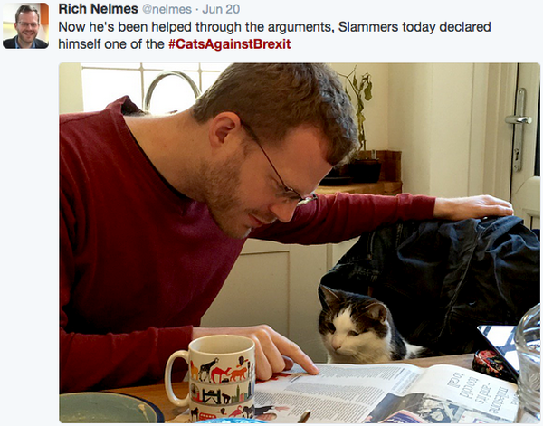 cats-against-brexit-cat-newspaper