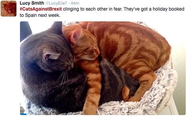 cats-against-brexit-clingy-spain