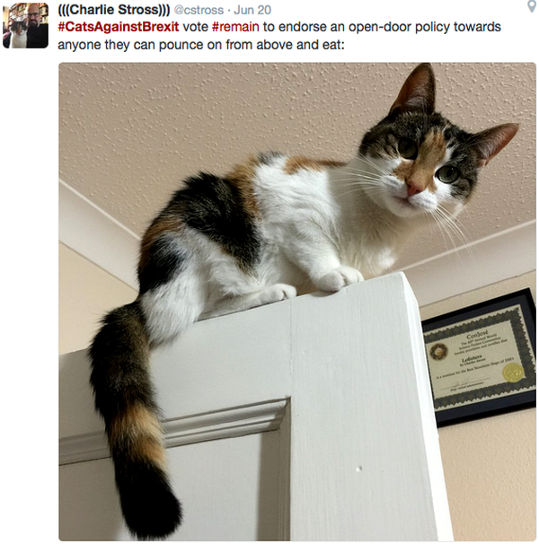 cats-against-brexit-door-pounce