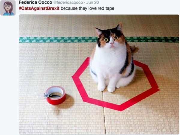 cats-against-brexit-red-tape