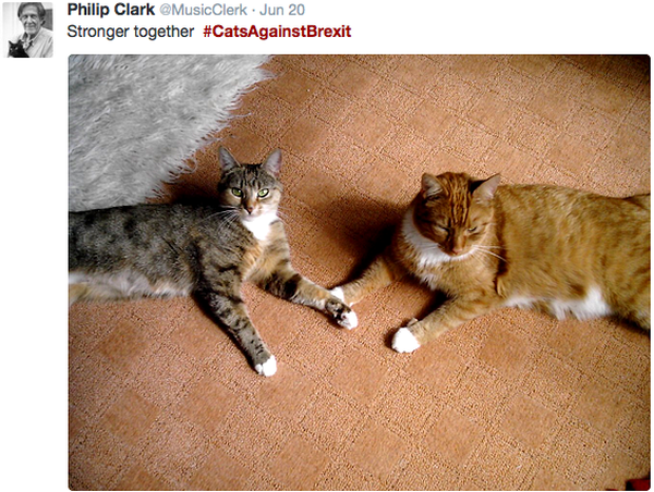 cats-against-brexit-stronger-together