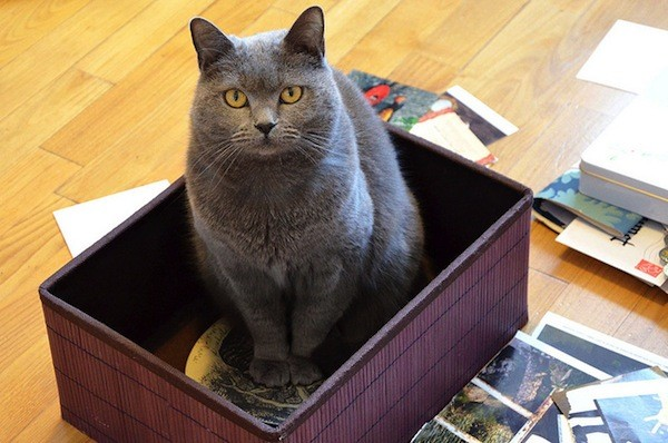 Kitty is in a box of emotion. Photo by Marie Guillaumet / Flickr