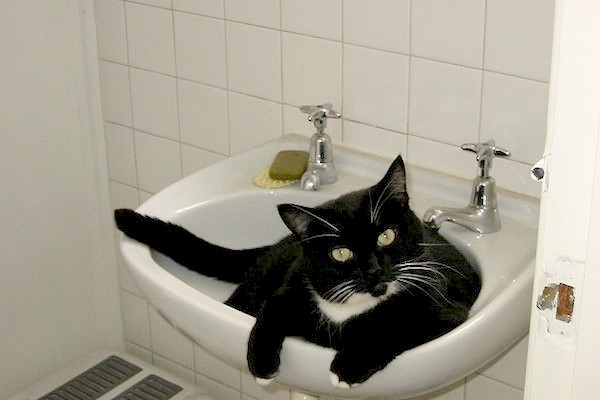 catster-kitty-in-sink-600x400