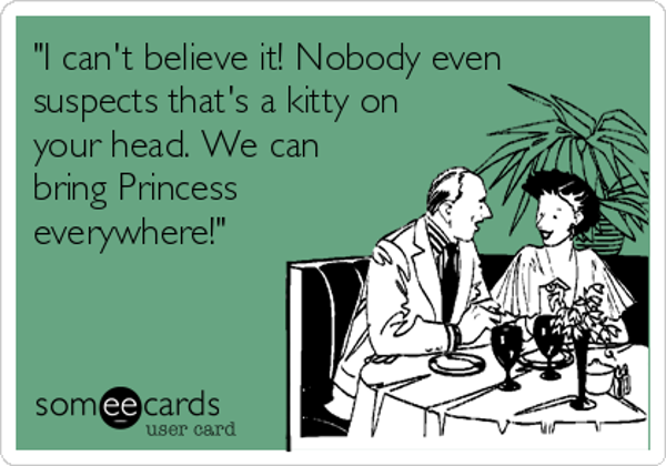 i-cant-believe-it-nobody-even-suspects-thats-a-kitty-on-your-head-we-can-bring-princess-everywhere-264e6