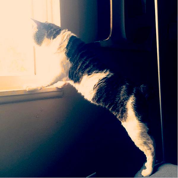 pix-we-love-booger-window-02