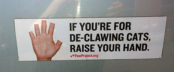 Anti-declawing bumper sticker from The Paw Project.