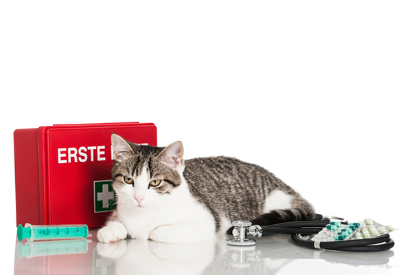 A cat next to a First Aid kit.