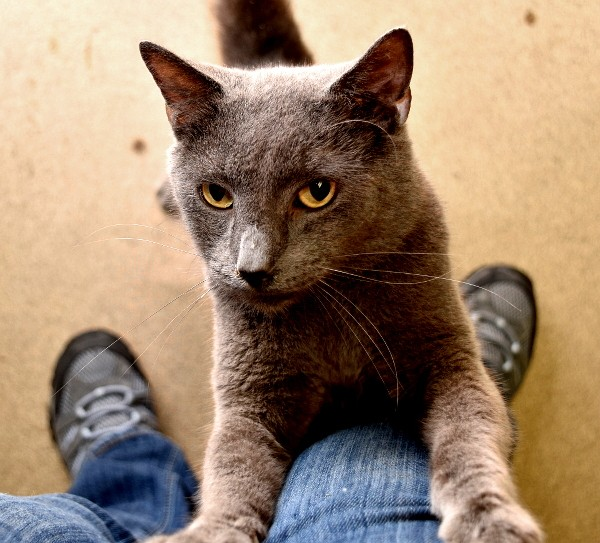 best-cat-house-pa-gray-cat-leg