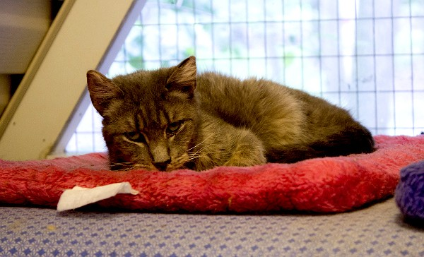 best-cat-house-pa-gray-cat-red-bed